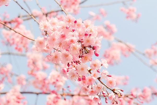 4月は春ニキビに要注意!新生活スタートに備える肌ケア